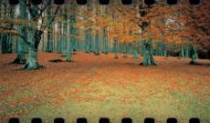 025. Diez Bosques Maravillosos por los que Pasear en Otoño