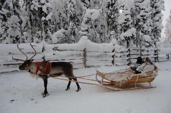Trineo tirado por renos en la región de Laponia